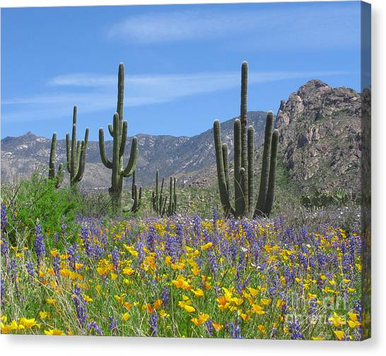Spring Flowers In The Desert Canvas Print by Elvira Butler