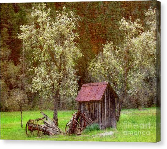Spring In Old Ranch Canvas Print