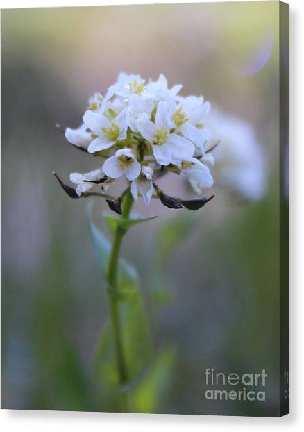 Spring In The Cimarrons Canvas Print
