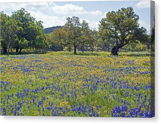 Spring In The Texas Hill Country Canvas Print