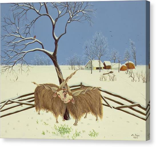 Yak Canvas Print - Spring In Winter by Magdolna Ban