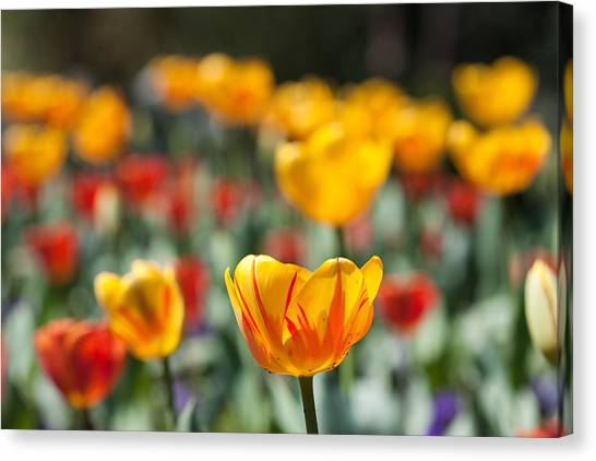 Spring Is Upon Us Canvas Print