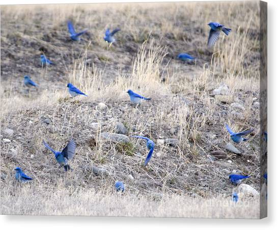 Spring Just Flew In Canvas Print