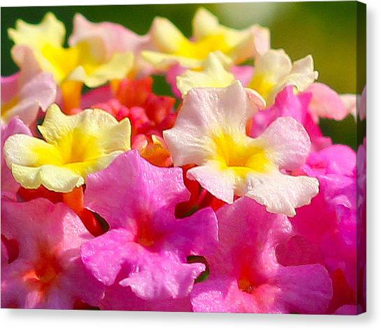 Spring Lantana Canvas Print by James Hammen