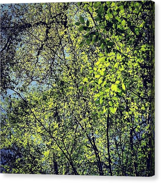 Forests Canvas Print - Spring Leaves  by Nic Squirrell
