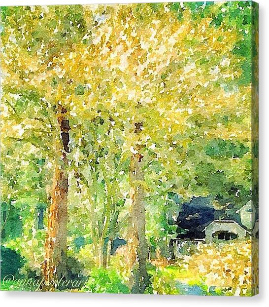 Sunny Canvas Print - Spring Maples by Anna Porter