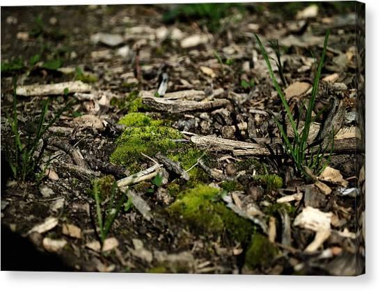Spring Moss Canvas Print