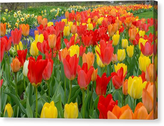 Spring Of Glory Canvas Print