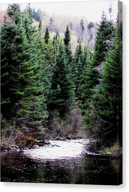 Spring On The Stream Canvas Print by Will Boutin Photos