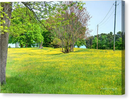 Wright State University Canvas Print - Spring Pasture - Nc State Dairy Farm by Paulette B Wright