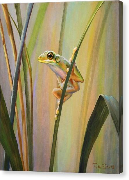 Frogs Canvas Print - Spring Peeper by Tim Davis