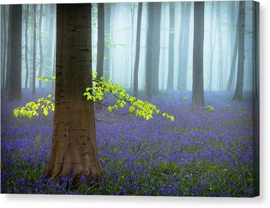 Spring........... Canvas Print by Piet Haaksma