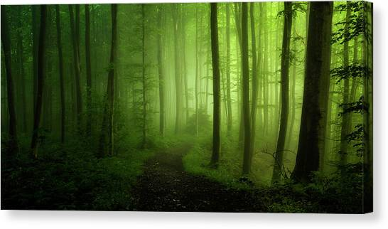 Spring Promise Canvas Print by Norbert Maier