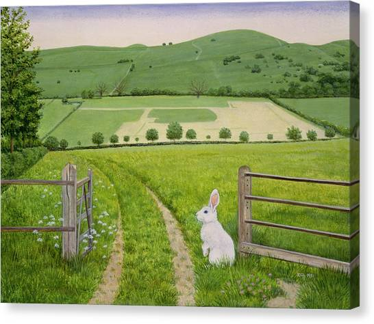 Meadow Canvas Print - Spring Rabbit by Ditz