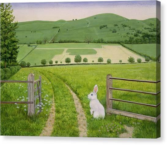 Field Canvas Print - Spring Rabbit by Ditz
