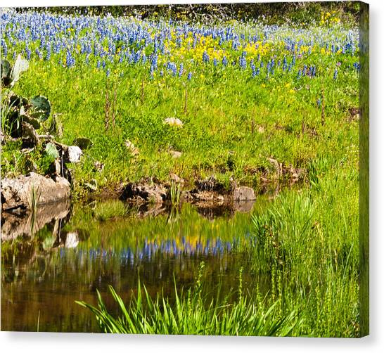 Spring Reflection Canvas Print by Thomas Pettengill