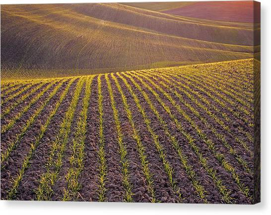Spring Rows Canvas Print