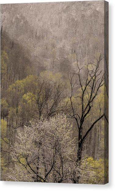 Spring Snow Canvas Print by Tom  Reed