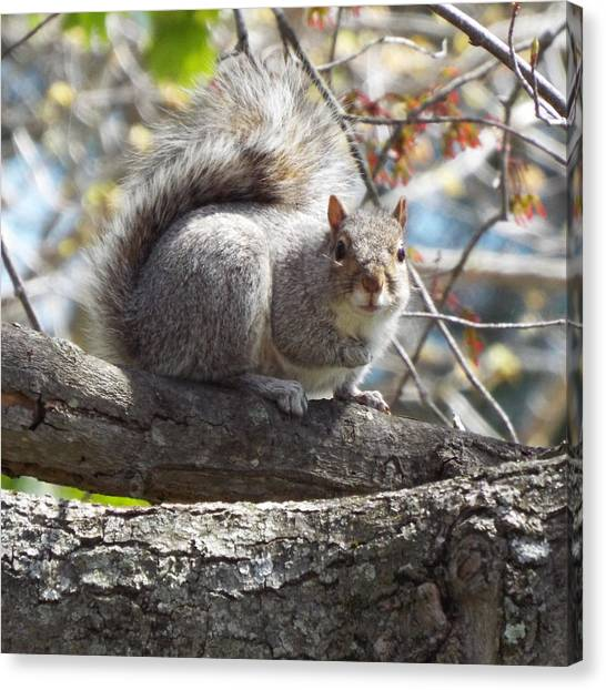 Canvas Print - Spring Squirrel by Lisa Roy
