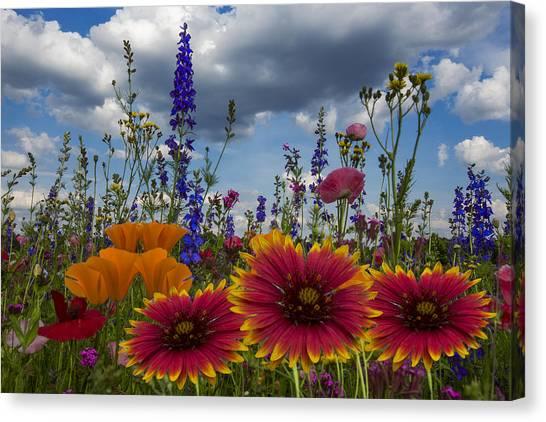 Poppys Canvas Print - Spring Symphony by Debra and Dave Vanderlaan