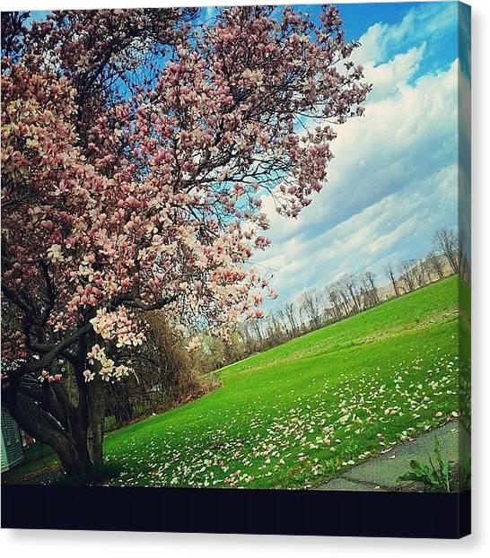 Harvard University Canvas Print - Spring Through The Car Window #amherst by Jennifer Gaida