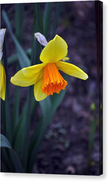 Spring Time Canvas Print by Larry Jones