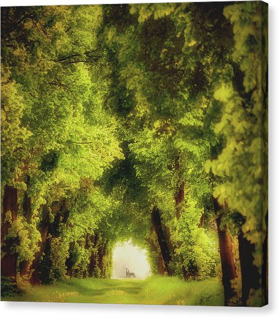 Forest Paths Canvas Print - Spring Time by Piotr Krol (bax)