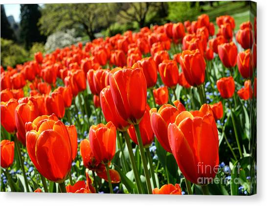 Spring Time Tulips 3 Canvas Print by Terry Elniski