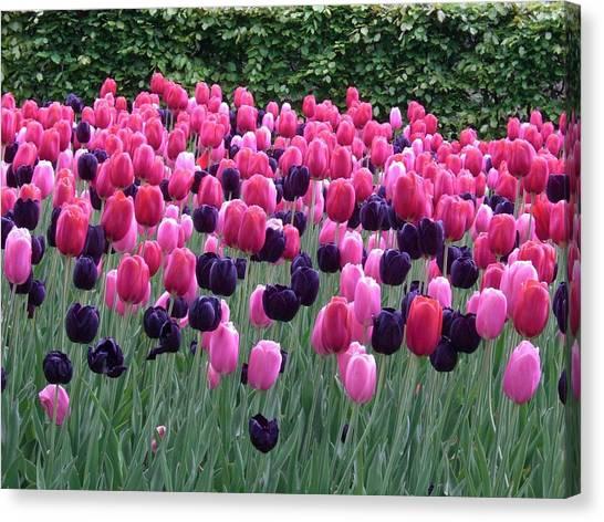 Spring Tulips Canvas Print