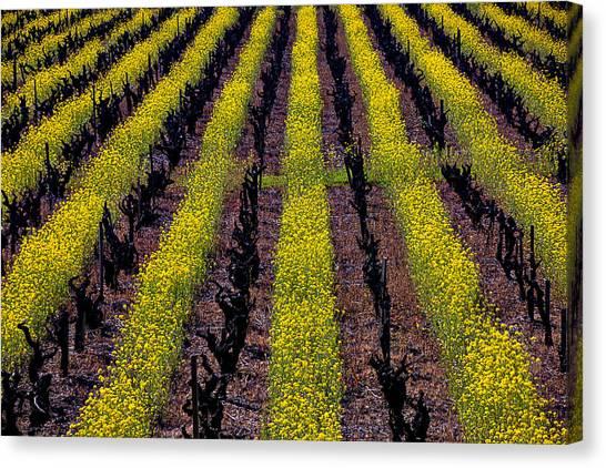 Mustard Canvas Print - Spring Vinyards by Garry Gay