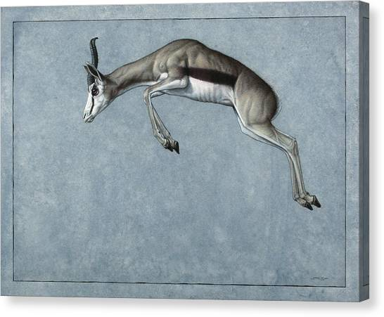 African Canvas Print - Springbok by James W Johnson