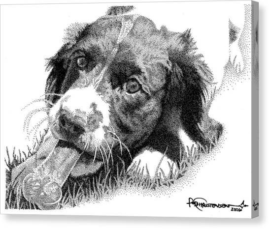 Springer Puppy Canvas Print by Rob Christensen