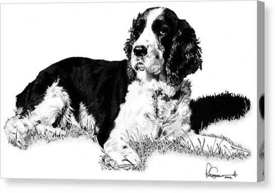 Springer Canvas Print by Rob Christensen