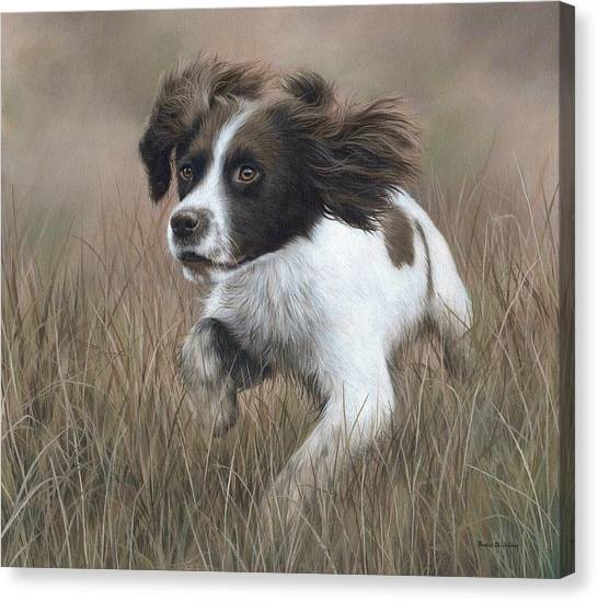 Springer Spaniel Painting Canvas Print
