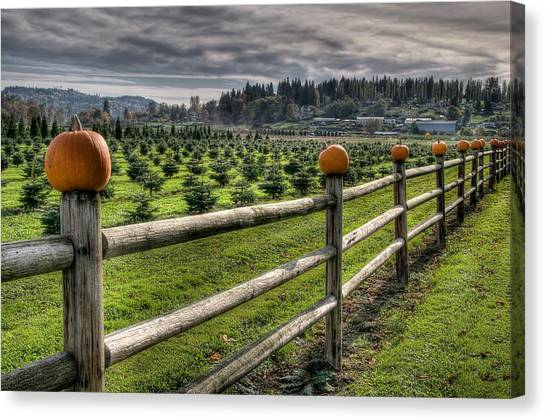 Springhetti Road Pumpkins Canvas Print