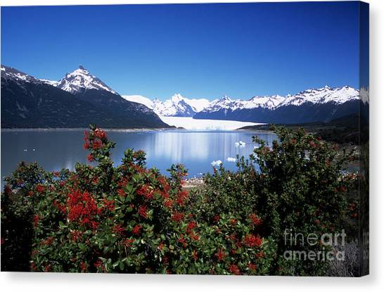 Perito Moreno Glacier Canvas Print - Springtime At Perito Moreno by James Brunker