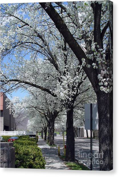 Springtime Corning Ny 2 Canvas Print