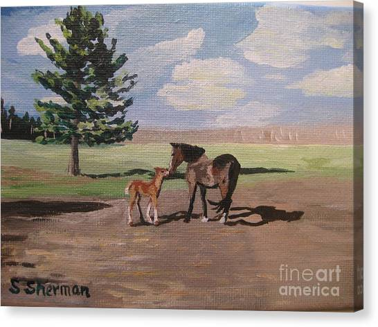 Springtime Foal Canvas Print
