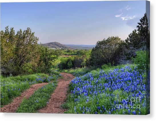 Texas Wildflowers Canvas Print - Springtime In The Hill Country by Cathy Alba