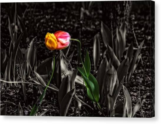 Springtime Kiss Canvas Print by Dan Quam