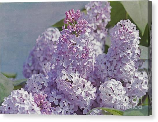 Springtime Lilacs Canvas Print