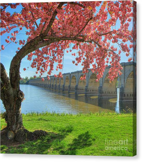 Springtime On The River Canvas Print
