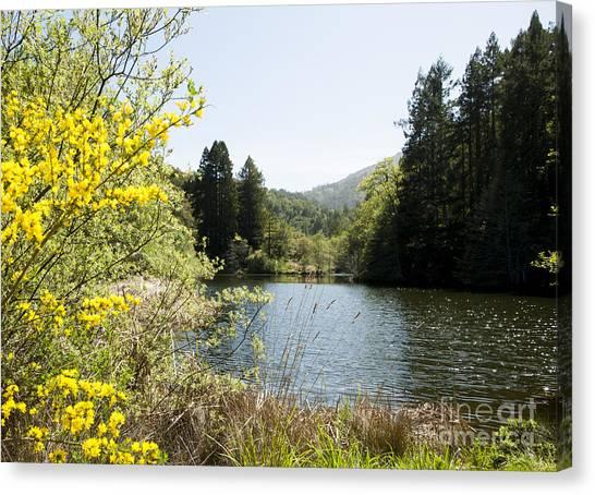 Springtime Phoenix Lake Canvas Print by Juan Romagosa