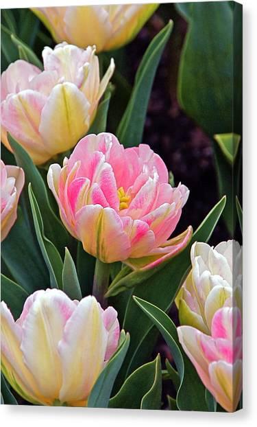 Springtime Sprites -- Parrot Tulips Canvas Print
