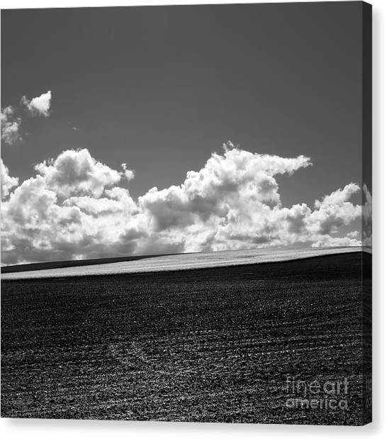 Sunflower Seeds Canvas Print - Sprouting Field Of Sunflowers And Field Of Rape At Back. Auvergne. France by Bernard Jaubert