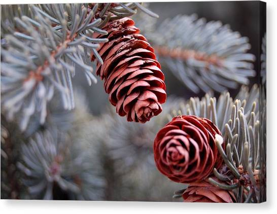 Spruce Cone Closeup II Canvas Print