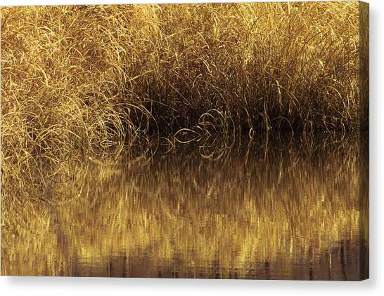 Spun Gold Canvas Print