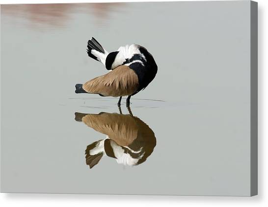 Lapwing Canvas Print - Spur-winged Plover by Photostock-israel/science Photo Library