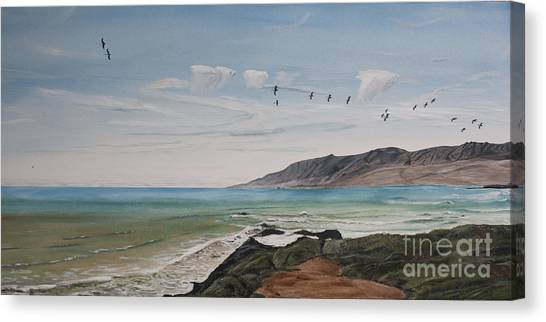 Squadron Of Pelicans Central Califonia Canvas Print