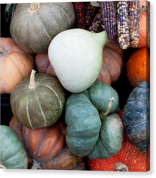 Pumpkins Canvas Print - Squash Medley by Elizabeth Gray